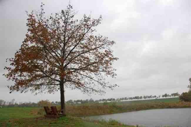 Tree Planting – Van Astens