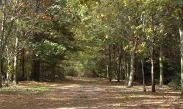 E.M. Warwick Conservation Area