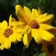 The Maple Leaf Cemetery Tall Grass Prairie Project Pollinator Enhancement Program