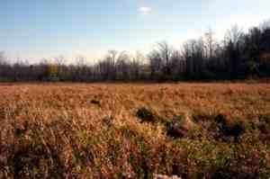 Wetland Before