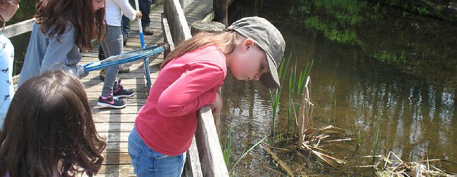 student exploring wetland boardwalk with class
