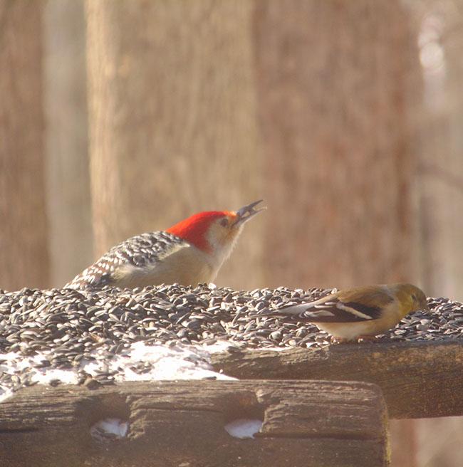 "Big ""O"" Birding Hike"