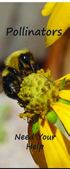 Pollinators Brochure Cover