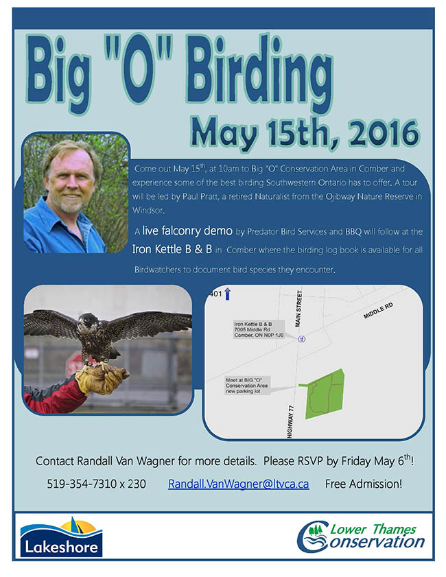 Big 'O' Birding May 15th