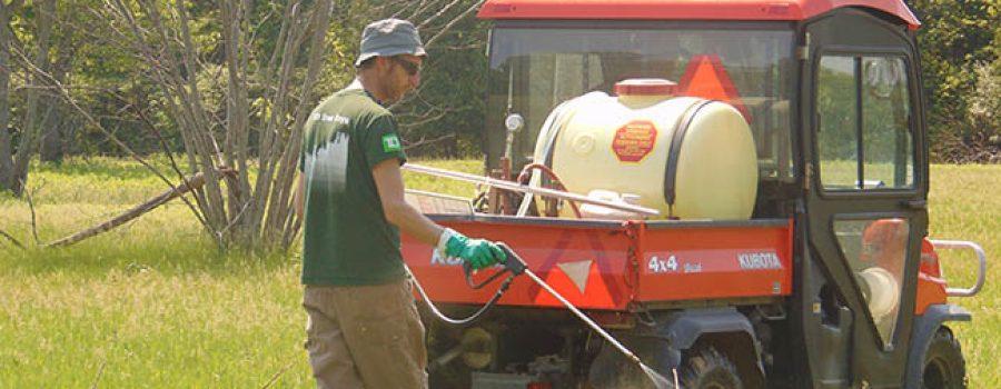 Spraying sumac at Sharon Creek