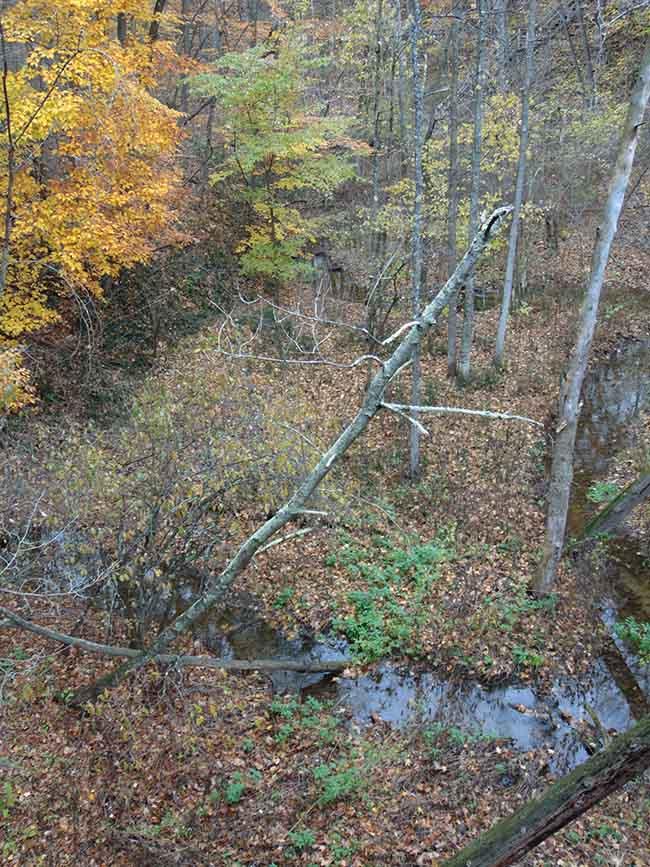 Carey Trail overlooking stream