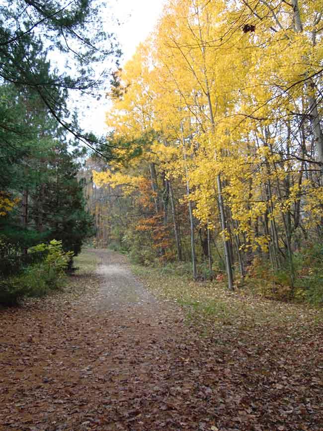 Longdo Trail trail to cabins