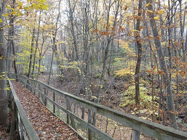 Millstream Trail heading down boardwalk