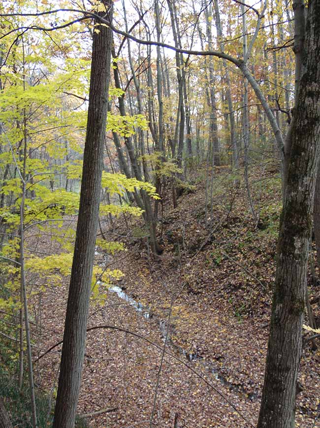 Millstream Trail overlooking streambed