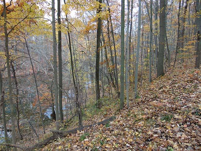Pondview Trail trail along millpond