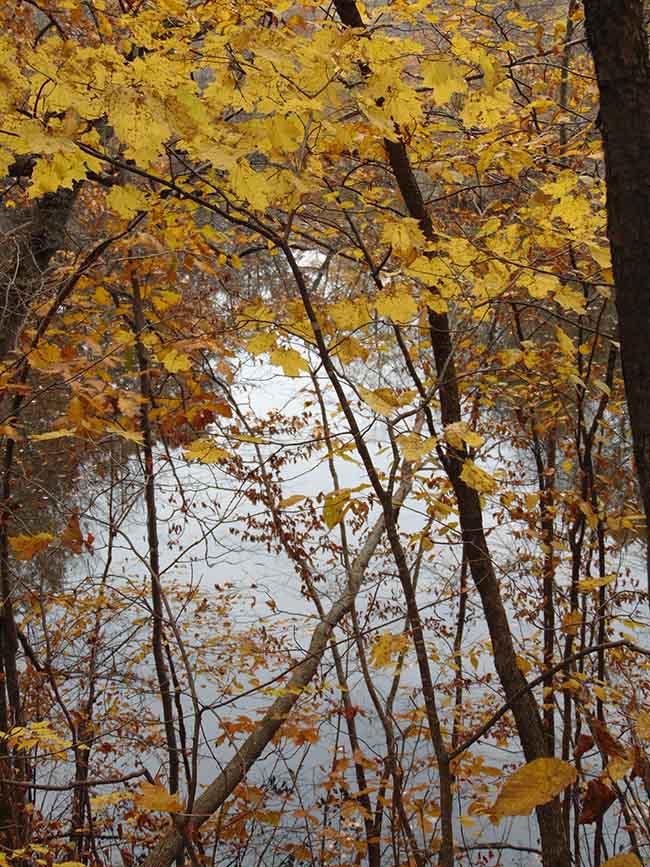 Pondview Trail pond through branches