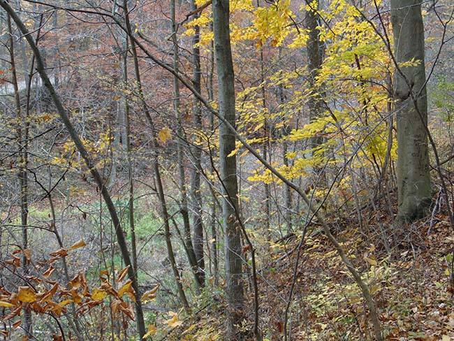 Turtle Trail ravine