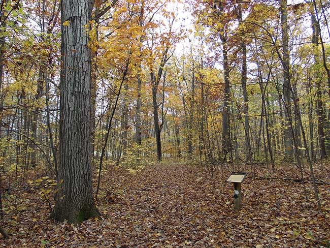 Wesrwood Trail entrance from Carey Trail