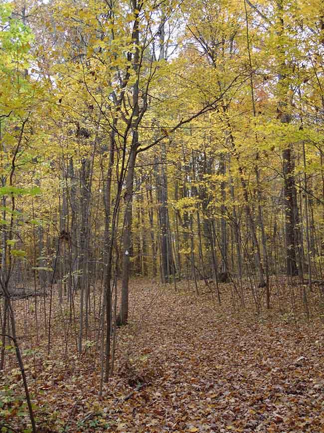 Westwood Trail on trail