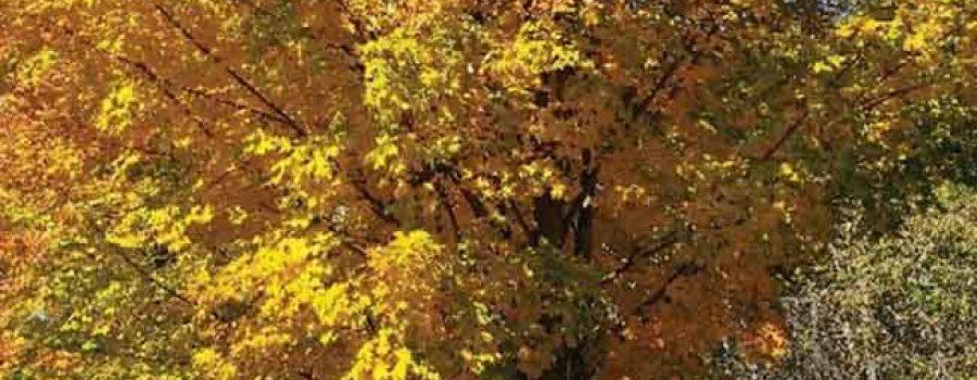 kids under fall tree