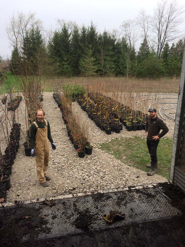 """2017 Tree Planting Season has Arrived!""  LTVCA Branches Out with130,000 Trees on Order This Spring"