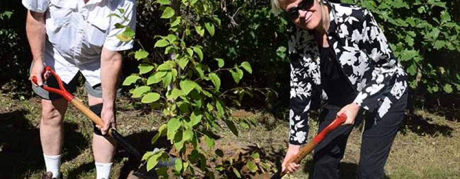 """""""Fall Memorial Forest Dedication Services to be Held in September"""" Remembering Loved Ones Through a Living Tree Memorial"""