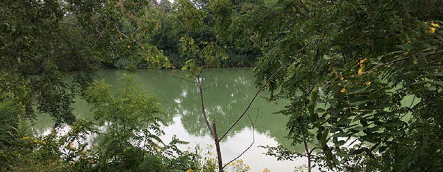 Thames River Blue-Green Algae Bloom