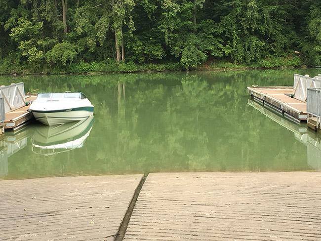 """Blue-green algae in Thames River"" Thames River Cyanobacteria Bloom in Chatham"