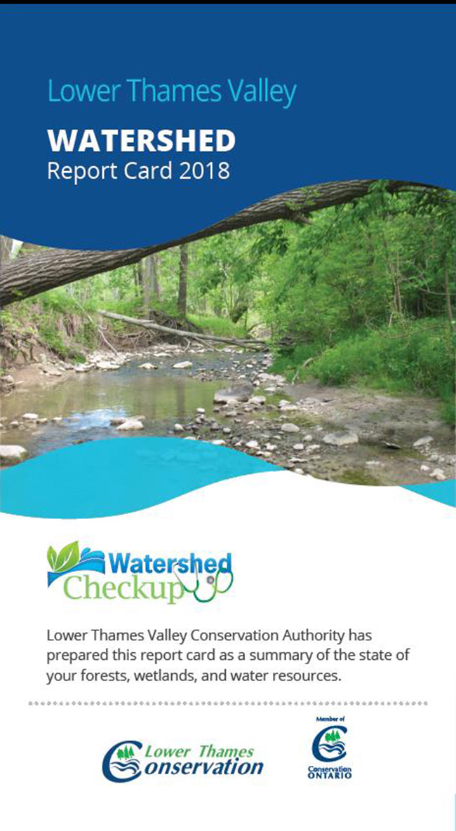 New Lower Thames Valley Watershed Report Cards Reveal Stressed Conditions in Our Watershed