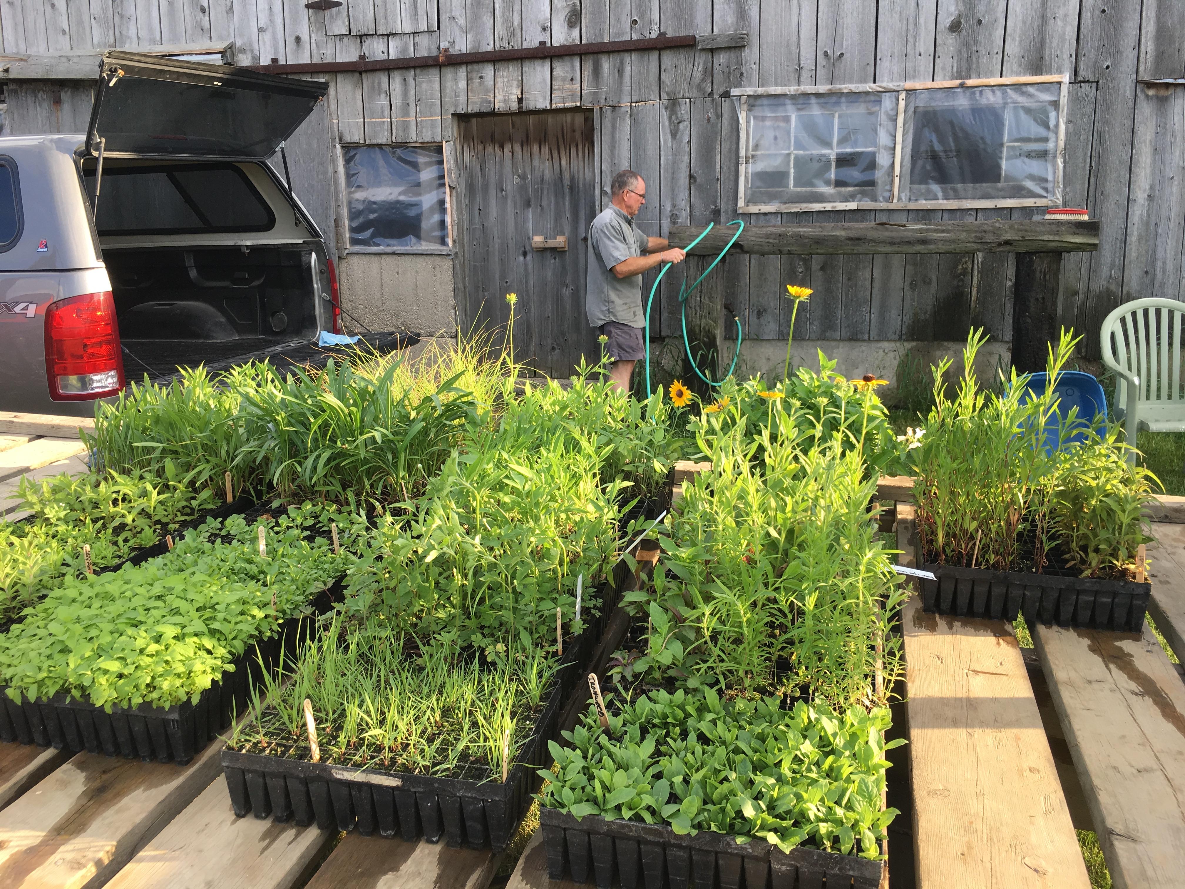 tallgrass prairie plants