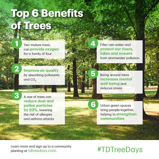 TD Tree Days in Chatham!