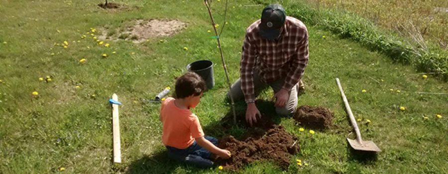 dad and son tree planting