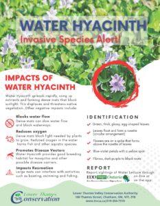 Water Hyacinth Invasive Species Alert flyer